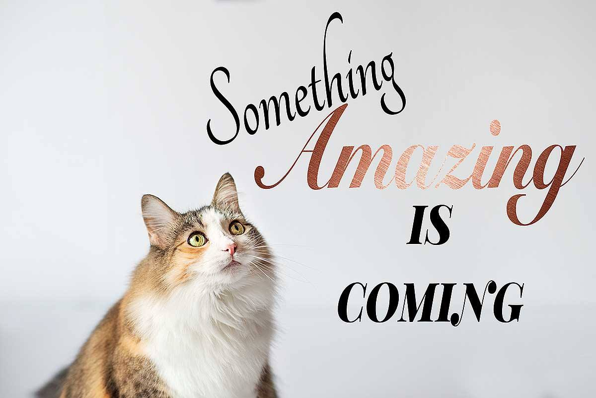 Something Amazing is Coming - Upgrade Your Session